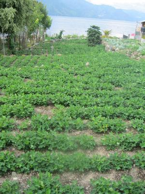 Vendo Lindo Terreno A Orillas Del Lago Atitlan
