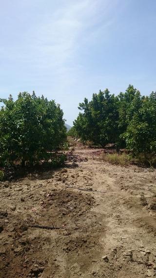 Finca De 2,800 Tareas Aguacate En Barahona