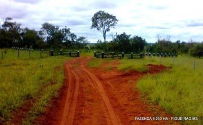 Fazenda A Venda Em Figueirão - Ms (pecuária) - 903