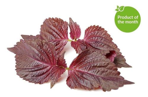 20 Sementes De Perilla Roxa Shiso Red Erva Flor Para Mudas