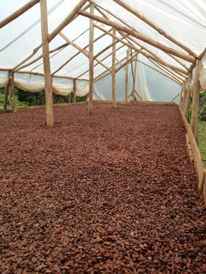 12.000 Tareas De Cacao