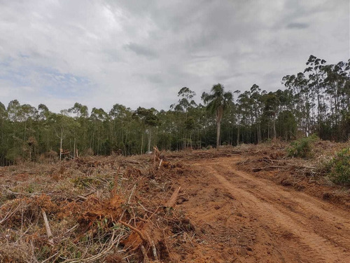 (k.a) Terrenos Limpos Em Ibiuna Corra