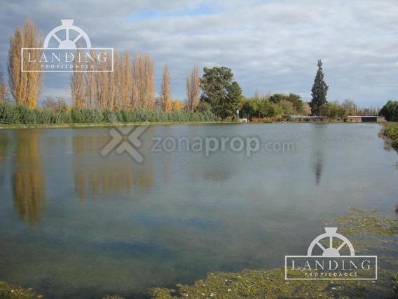 Campo - Finca Productiva De Primer Nivel, Mendoza, 80 Hectareas