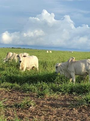Fazenda A Venda Em Sta. Rita Do Tocantins To (dupla Aptidão) - 1065