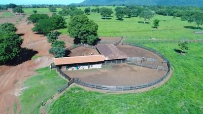 Excelente Fazenda Município Capinorte Goiás