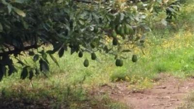 Rancho Umecuaro