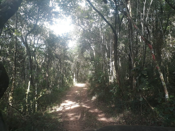 Sítio Nas Montanhas De Minas , Em Aiuruoca, Com 15,59 Hectares, Altitude 1342 Metros, Ideal Para Oliveiras. - 510