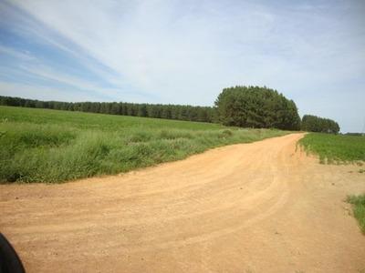 Fazenda Em Paracatu - Mg, Dupla Aptidão - 310