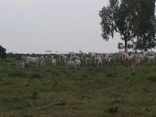 Venda Fazenda De 698 Hectares Em Bataiporã-ms - 6012