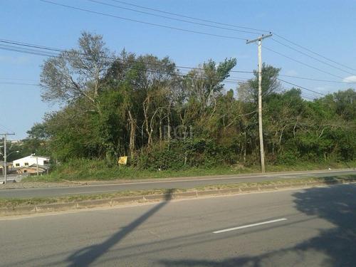 Terreno Em Lomba Do Pinheiro - Pj2566