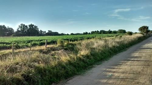 Imagen 1 de 9 de Campo En Gral. Madariaga