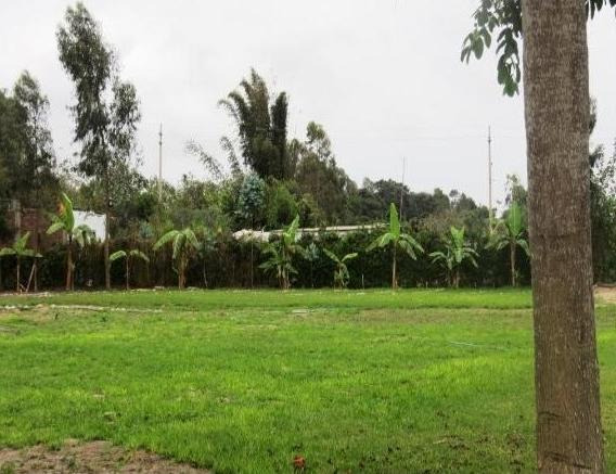 Remato Terreno Mala Us $40 Mt2 X 9,937m2 Agricola Full Produ