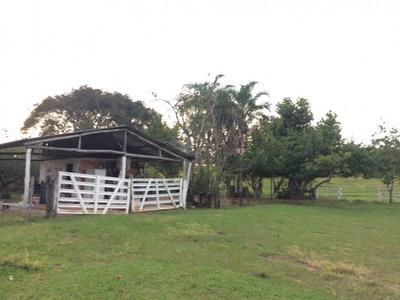 Fazenda A Venda Em Camapuã - Ms (pecuária) - 710