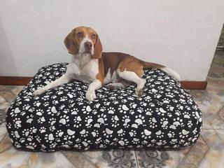 Colchon Cama Puff Para Perros Impermeable Lavable 110x70 X15