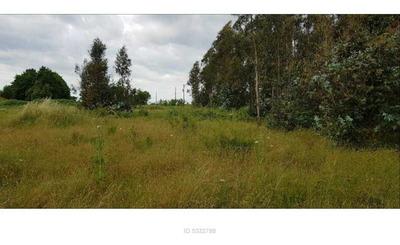 Camino Coihueco, Región Del Biobío