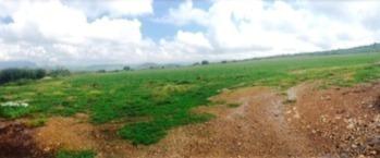 Venta Rancho Por La Peña De Bernal Qro. 261 Has.