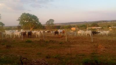 Fazenda A Venda Em Corguinh0 - Ms (pecuária) - 1072