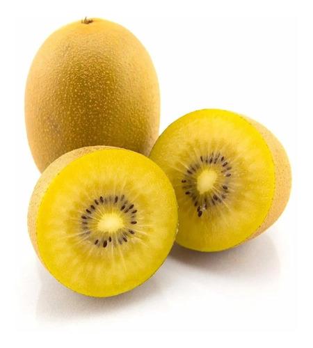 Sementes De Kiwi Gold Kiwi Ouro Rarissimas Frutiferas Mudas