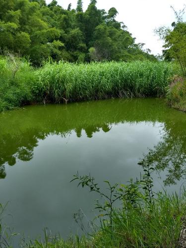 Imagem 1 de 14 de Sitio 2,5 Alqueire Na Br 153 Entre Getulina E Guaimbe