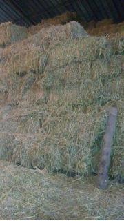 Fardos Cuadrados Y Redondos De Alfalfa Precio A Conversar
