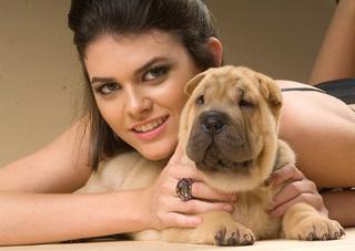 Cachorros Shar Pei, Espectaculares, Pedigree, Vacunas