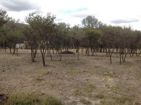 Terreno Plano Por Utt En Tula Hgo Con Facilidad De Pago