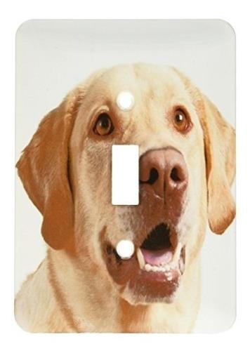 3drose Lsp_93952_1 Oregon Keizer Labrador Retriever Perro