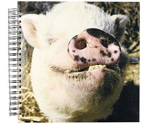 3drose Db_92681_2 Pet Pot Bellied Pig Farm Animal Nuevo Mexi