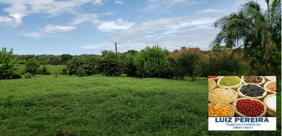 Fazenda A Venda De 98 Alqueirões Em Palmas - To (dupla Aptidão) - 1120