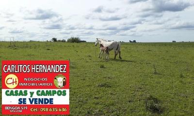 En Montevideo Necesitamos Campos P Arrendar Se Ofrece Garant