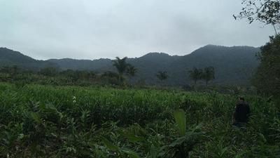 Ótimo Sítio No Jardim Mambu, Em Itanhaém, 288000m², Ref 4905