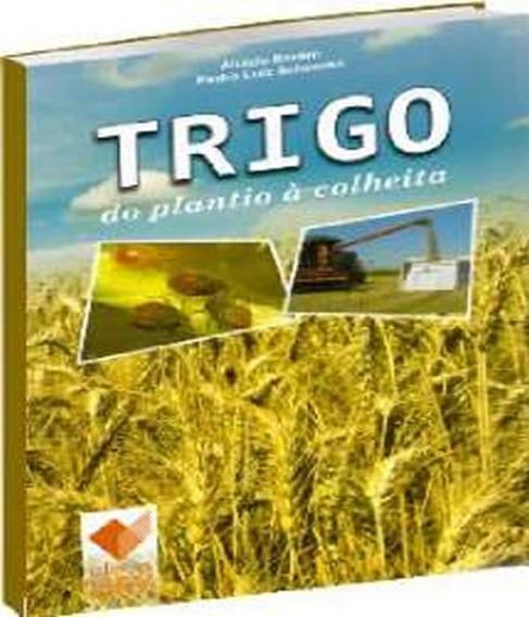 Trigo - Do Plantio A Colheita