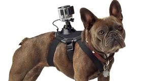 Suporte De Câmera Gopro Ajustável Para Peito De Cães