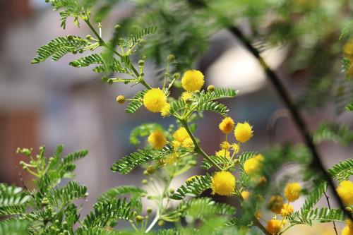 Nature-messina-italy-3 Fotografia