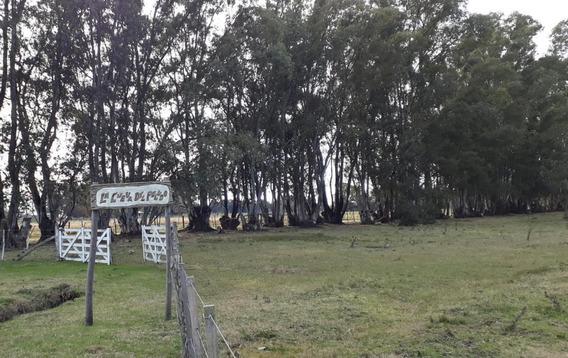 Campo Venta 5 Hectáreas - Las Flores