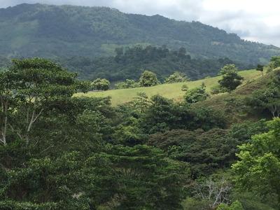 Vende Finca En Turbo Antioquia