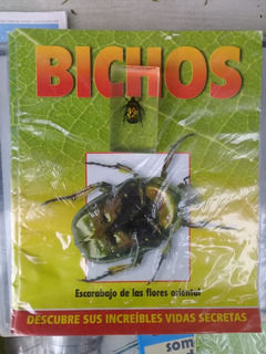 Colección Bichos, Escarabajo De Las Flores Oriental