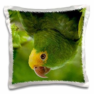 Danita Delimont Pájaros Tropicales Loro Amazónico Amazo