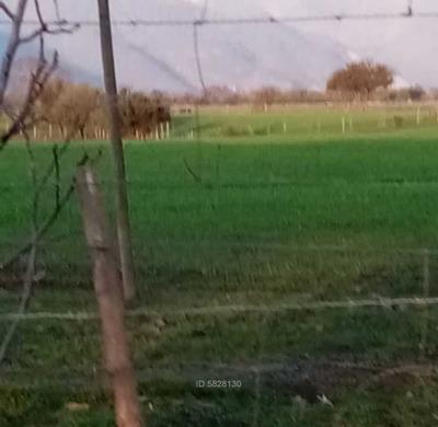 Parcelas De Pincha / Riquelme