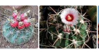 Plantas Deserticas 10 Semillas Por 35 Mas Envio