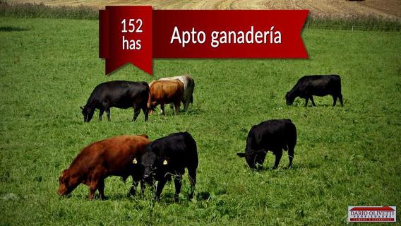 Venta Campo Ganadero 152 Has San Jaime Entre Rios
