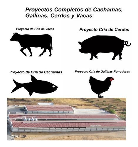 Imagen 1 de 1 de Proyectos Completos De Tilapias, Gallinas, Cerdos Y Vacas