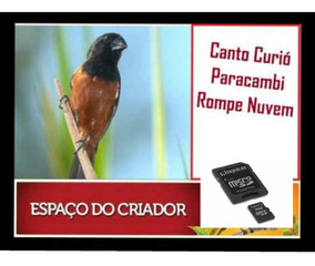 CLASSICO CURIO CANTO DE BAIXAR PARACAMBI