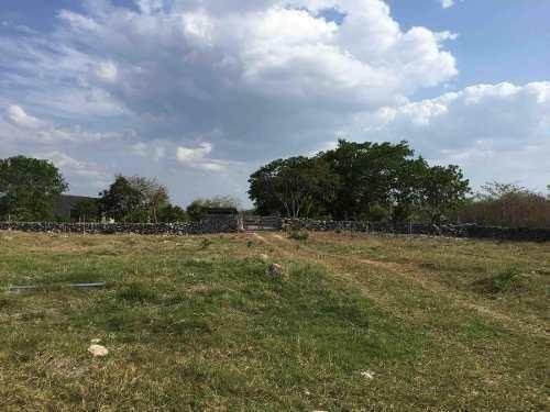 Rancho Ganadero Guadalupe En Yucatán, México.