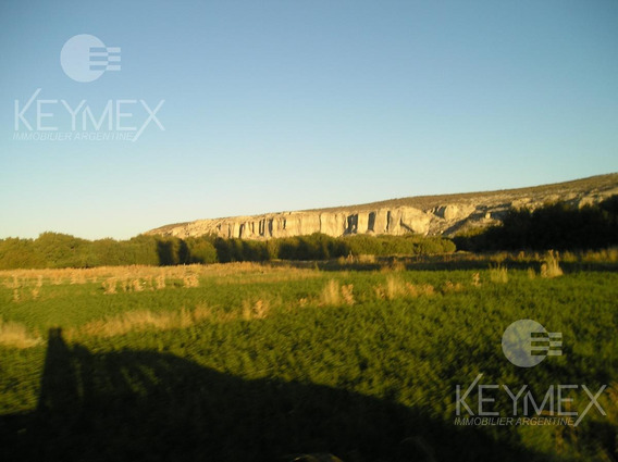 Campo Ganadero - Telsen - Chubut