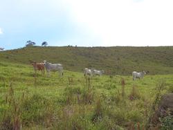 Fazenda Em Baependi Sul De Minas Com 103,1 Ha, Toda Formada - 01 Casa- Curral - Bom De Água. - 2942