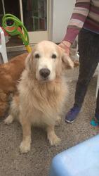 Guarderia Canina, Baños Y Adiestramiento, Traslados