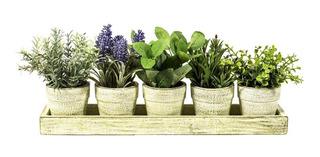 5 Plantas En Bandeja The Garden
