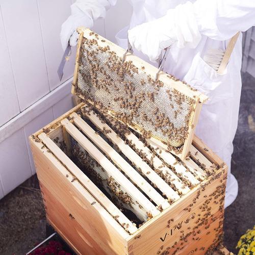 Vivo Completa Apicultura 20 Del Marco De La Colmena Kit Box,
