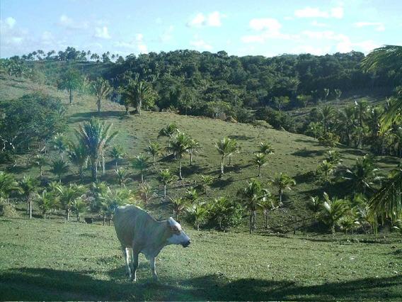 Jd Linda Fazenda Bem Prox Das Praias Do Sul Da Bahia
